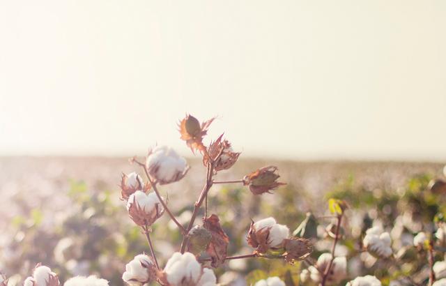美好日常   棉,只有肌肤懂得的温柔
